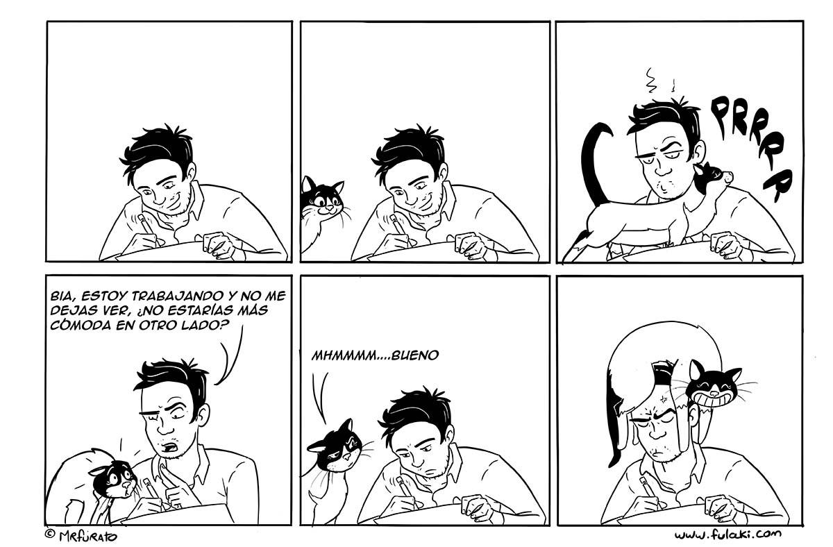 Gato comodo